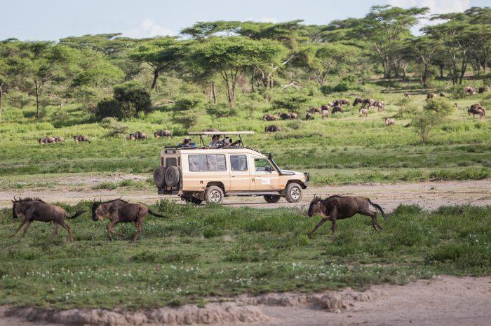 Du Ngorongoro au Serengeti, joyaux de la Tanzanie