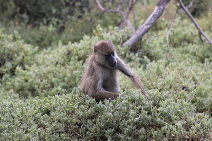 Au coeur de la vie sauvage, Tanzanie