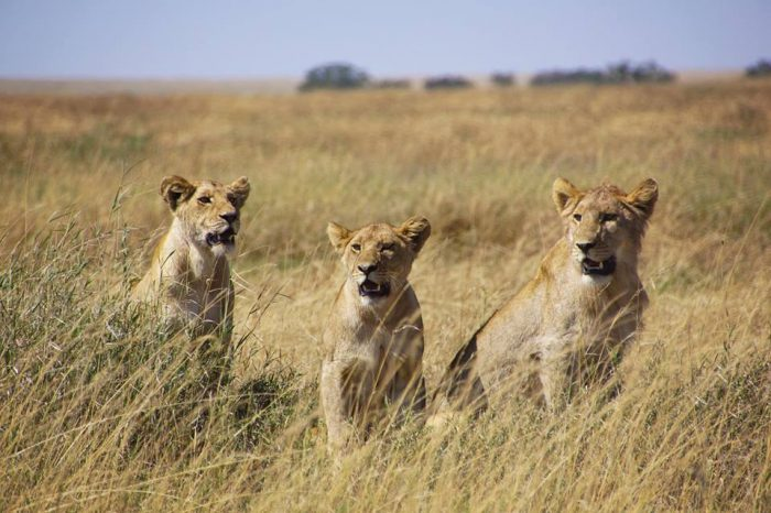 Kenya, la légende du safari