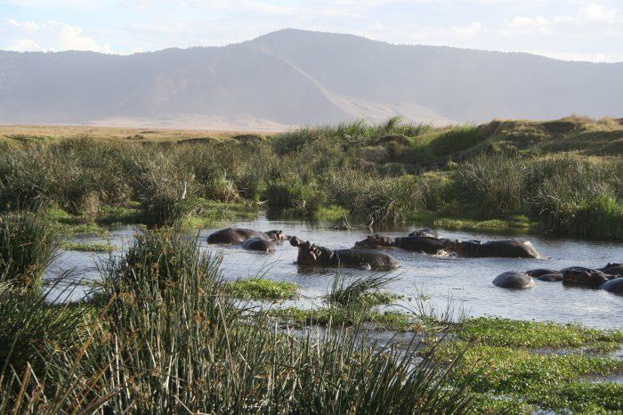 Safari dans le cratère du Ngorongoro
