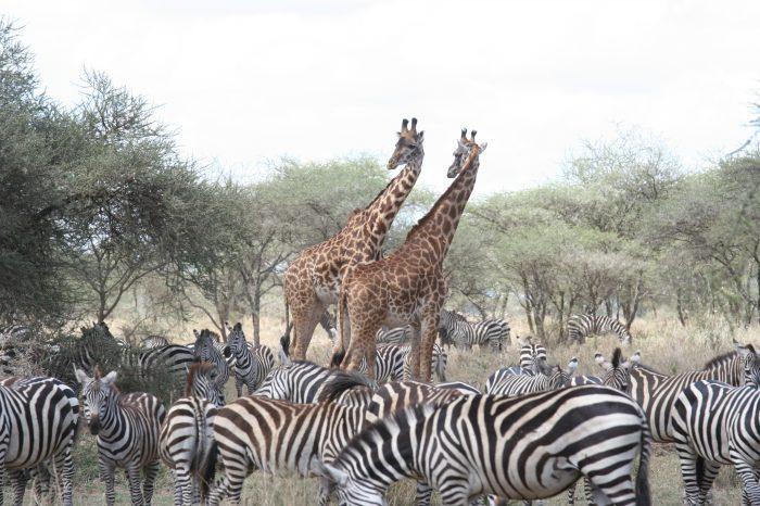 Escapade en avion-taxi au Serengeti