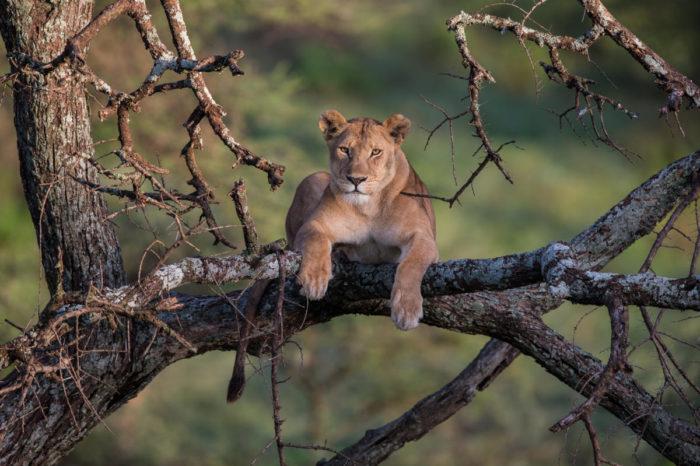 Safari «Le Big five», guide privé en Tanzanie