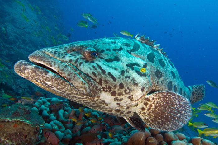 Plongée sur les coraux de l'île de Mafia, Tanzanie
